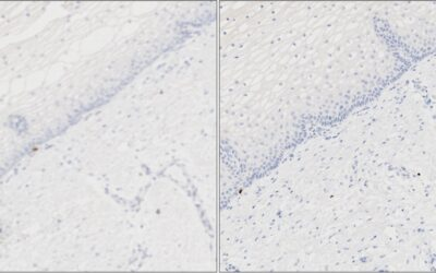 Image Analysis Quality Control Part 1: Image Scan QC