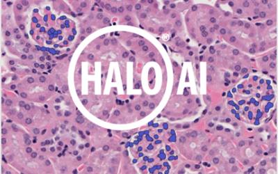 OracleBio integrates Indica Labs HALO AI™ to enhance Digital Pathology Software Capabilities