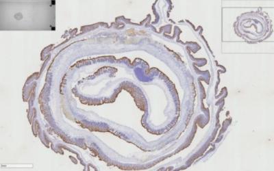 Microscope Slide Scanning