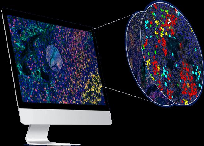 digital pathology services